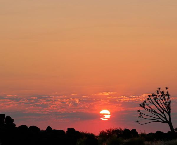 Reise in Namibia, Bebenbaum vor der Kulisse des Wüstensonnenuntergangs