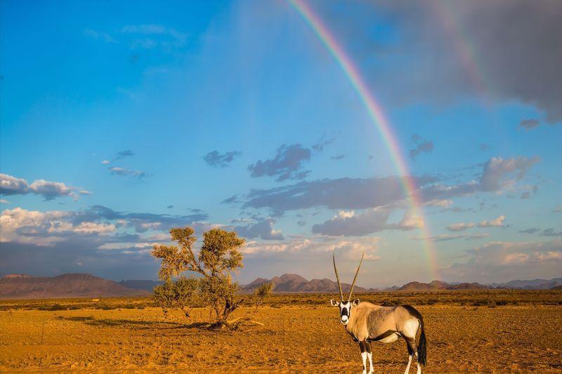 Reise in Namibia, Namibia - Im Farbspiel der Wüste