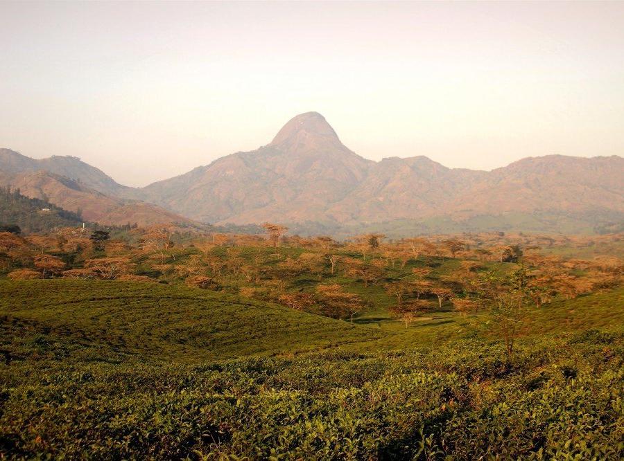 Reise in Mosambik, Teeplantagen in Gurué, Zambézia-Provinz