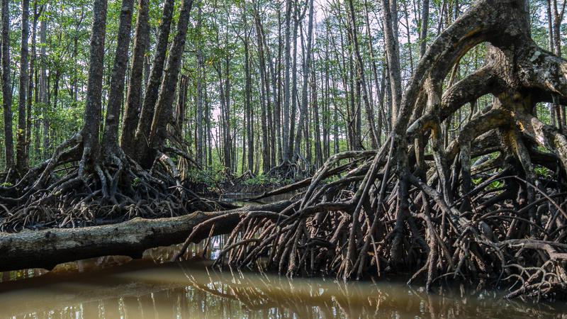 Reise in Philippinen, Paddelboot-Tour durch die Mangroven bei Sabang