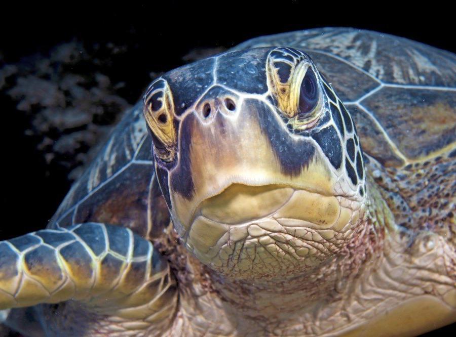 Reise in Indonesien, Meeresschildkröte