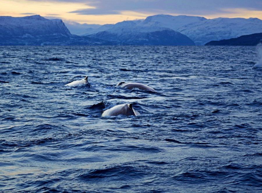 Reise in Norwegen, Abendstimmung in Nordnorwegen