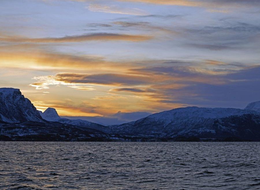 Reise in Norwegen, Gruppe Buckelwale