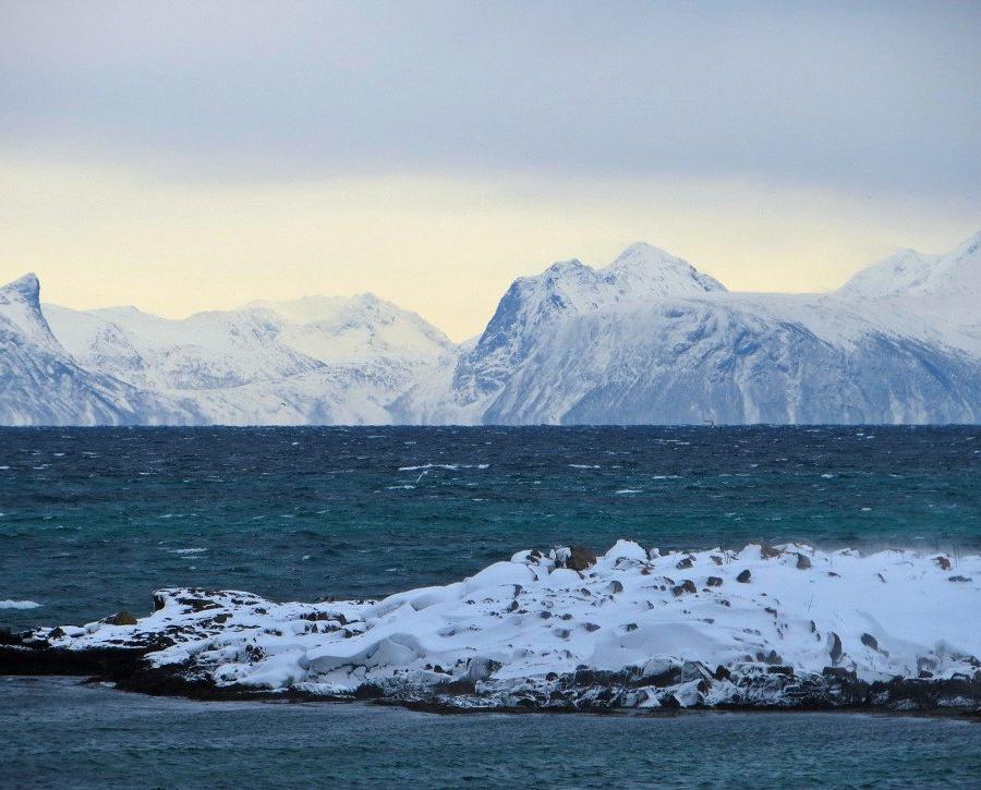 Reise in Norwegen, Mächtige Finne eines Orca