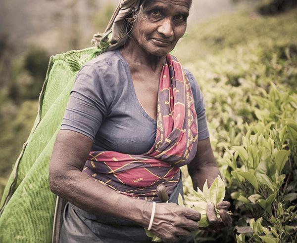 Reise in Sri Lanka, Sri Lanka - Aktiv entdecken
