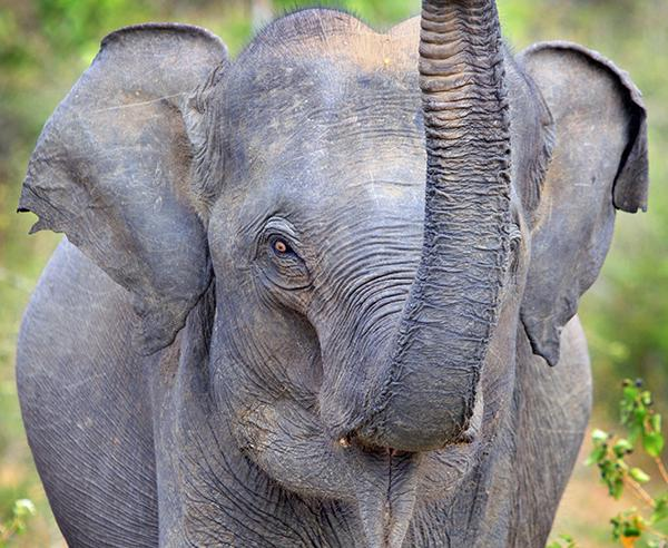 Reise in Sri Lanka, Sri Lanka - Authentisch & komfortabel: die besondere Reise