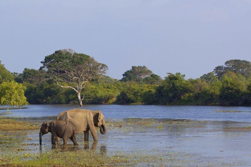 Reise in Sri Lanka, Während unserer Jeep-Safari im Wilpatthu-Nationalpark können wir mit Glück wilde Elefanten erspähen