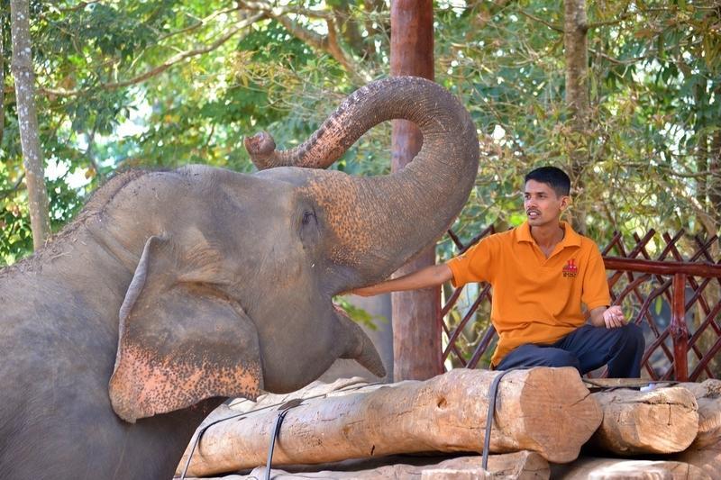 Reise in Sri Lanka, Besuch in der Elefanten-Rettungsstation Udawalawe während der Gruppenreise nach Sri Lanka