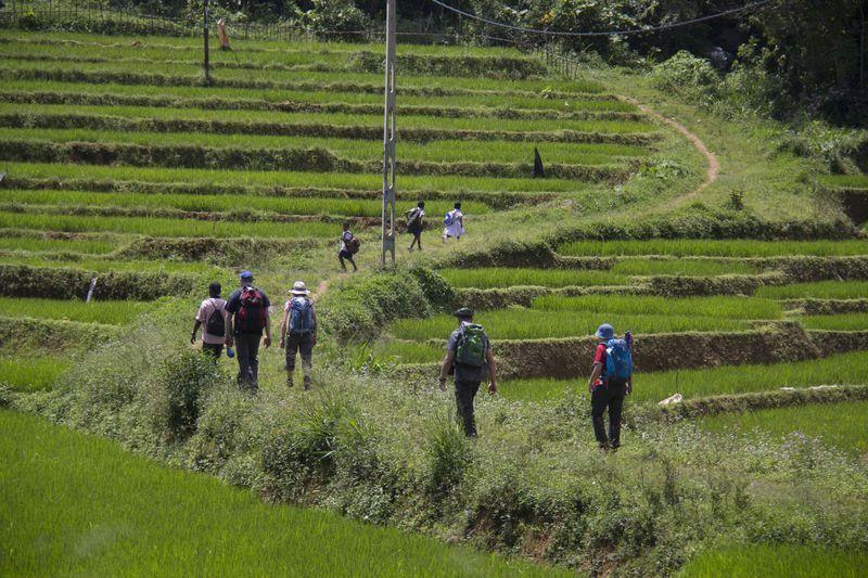 Reise in Sri Lanka, Die Reisegruppe wandert im zentralen Hochland von Sri Lanka durch terrassierte Reisfelder