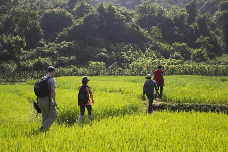 Reise in Sri Lanka, Sri Lanka: Wandern auf der Tropeninsel