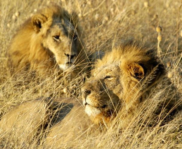 Reise in Botswana, Südafrika, Botswana & Simbabwe - Untouched!