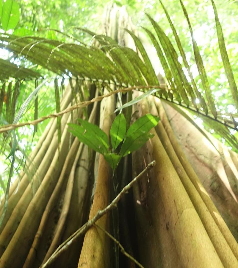 Reise in Suriname, Lokale Flora und Fauna des tropischen Regenwaldes