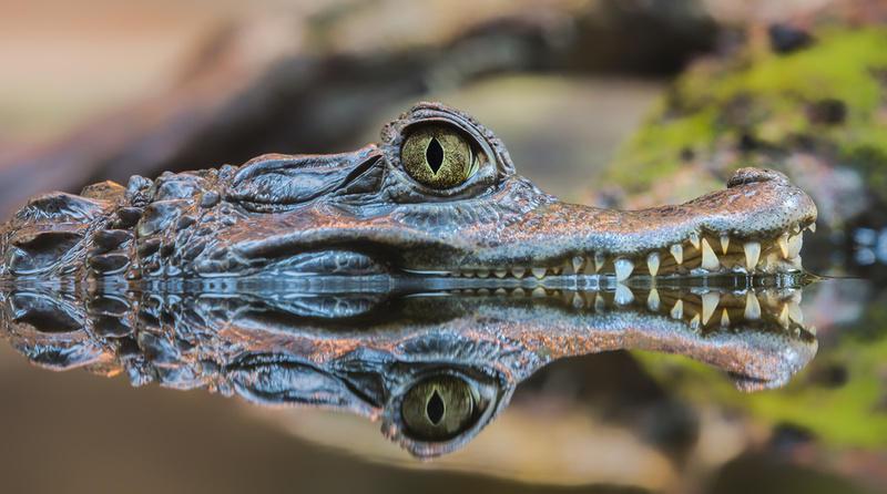 Reise in Suriname, Exotische Tiere im Regenwald