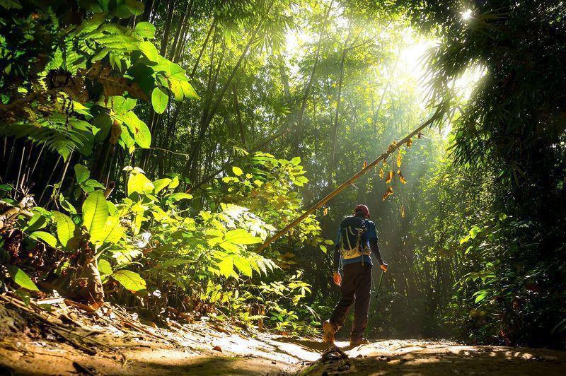 Reise in Suriname, Wanderung im Regenwald Surinames