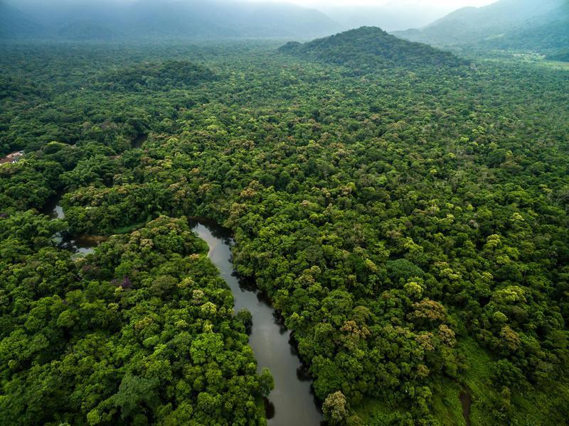 Reise in Suriname, Suriname Regenwald