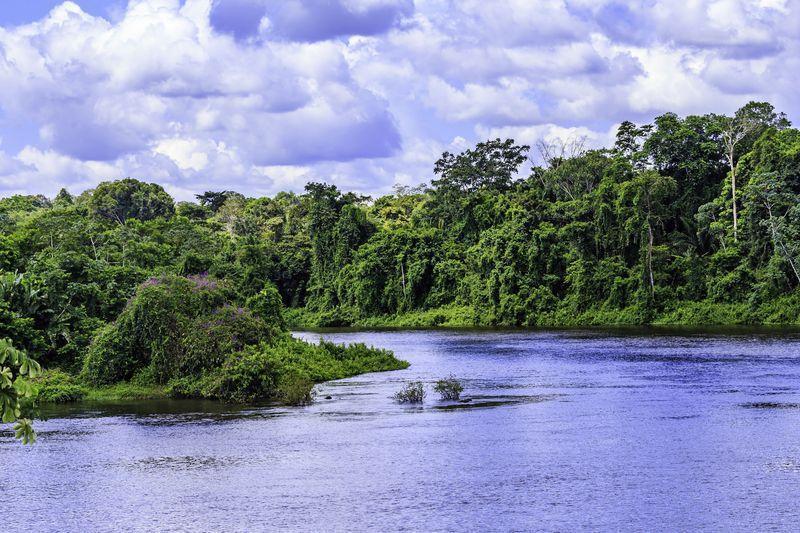 Reise in Suriname, Suriname Dschungel