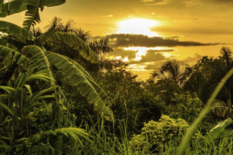 Reise in Suriname, Suriname Sonnenuntergang