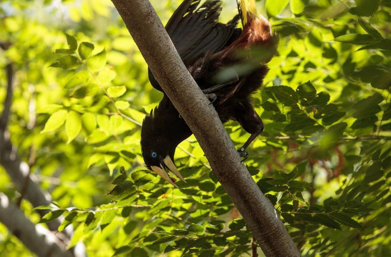 Reise in Suriname, Lokale Flora und Fauna