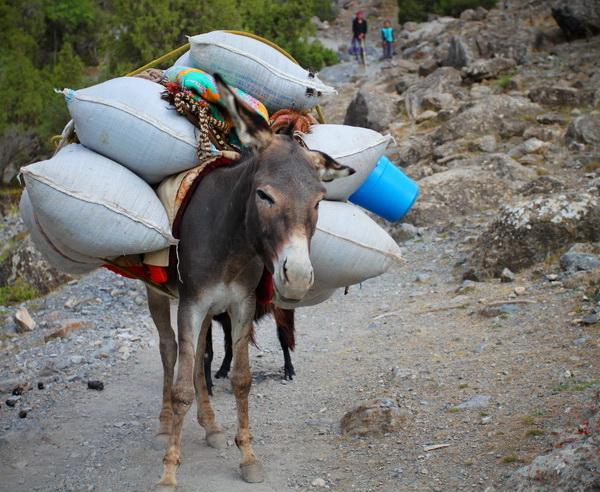 Reise in Tadschikistan, Packesel in den Bergen in Tadschikistan