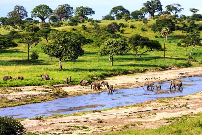 Reise in Tansania, Elefanten durchqueren die Serengeti in Tansania