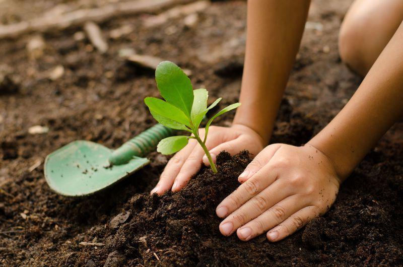 Reise in Tansania, Baumpflanzungsprojekt in Tansania