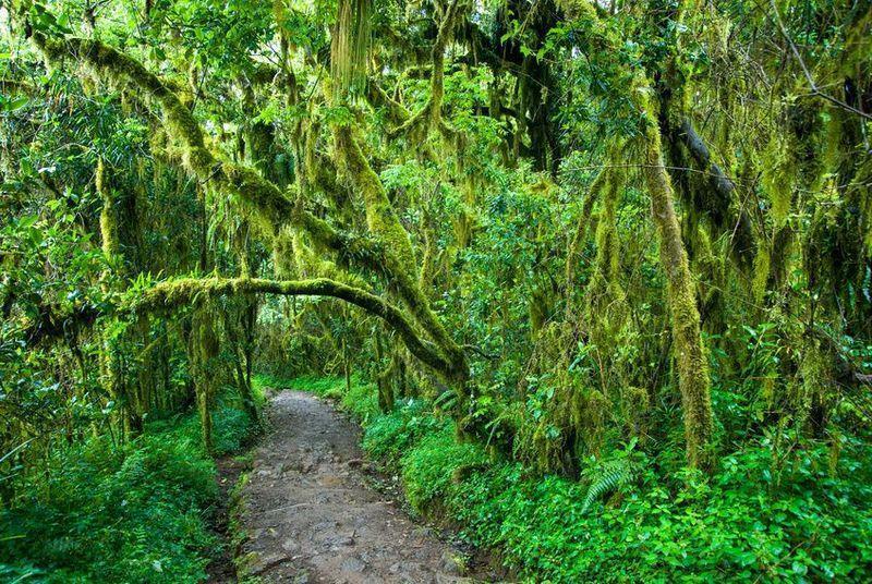 Reise in Tansania, Regenwald in Tansania