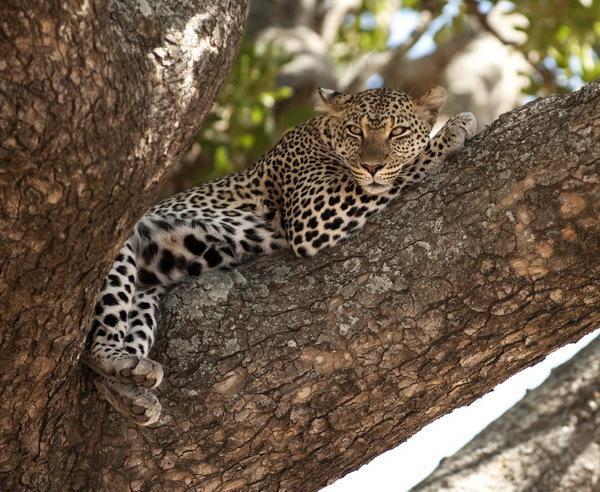 Reise in Tansania, Tansania - Safari-Erlebnis im Norden