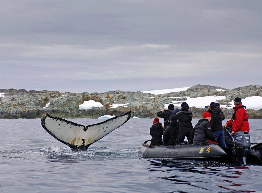 Reise in Antarktis, Terra Incognita – Abenteuer am Polarkreis Expeditionskreuzfahrt Antarktische Halbinsel • South-Shetland-Inseln