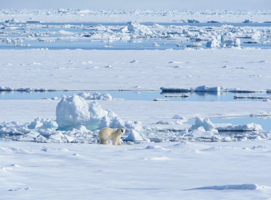 Reise in Niederlande, Wo Eis ist, sind Eisbären nicht weit weg