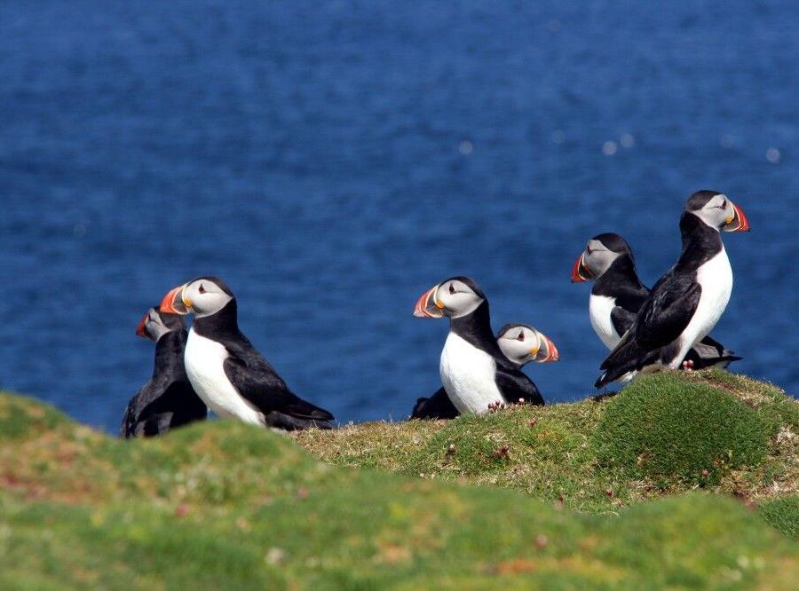 Reise in Niederlande, Das Vogelobservatorium auf Fair Isle