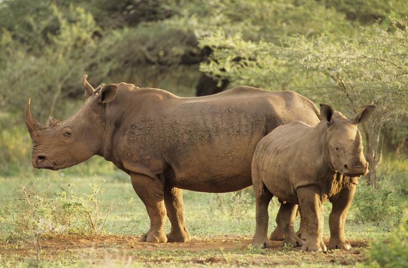 Reise in Uganda, Zu Fuß durch das Ziwa Nashorn-Reservat in Uganda