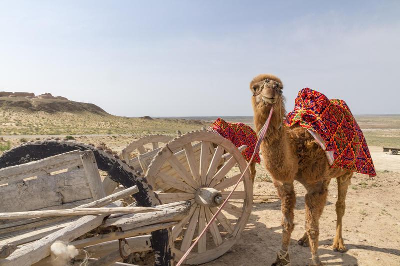 Reise in Usbekistan, Usbekistan - Usbekistan aktiv