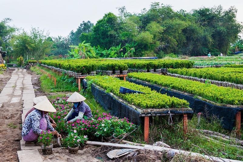 Reise in Vietnam, Blumengärten in Sa Dec in Vietnam