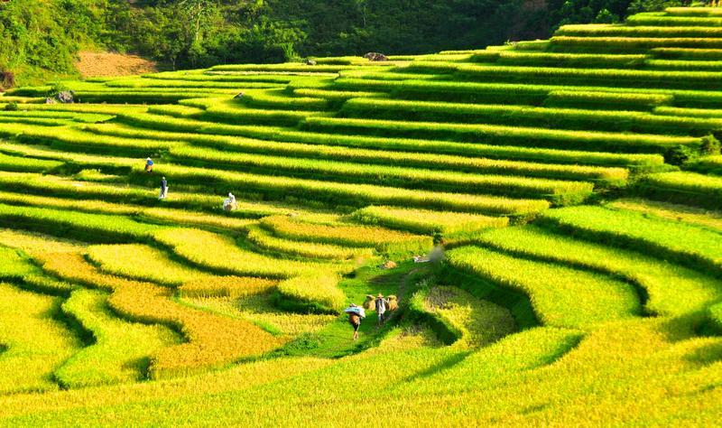 Reise in Vietnam, Vietnam-Unsere Wanderung im Pu Long-Nationalpark führt uns durch Reisterrassen und kleine Dörfer