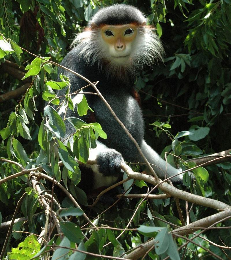 Reise in Vietnam, Vietnam-Wir sind zu Gast im artenreichen Cuc Phuong Nationalpark und besuchen das Primate Rescue Center wo uns eine Biol