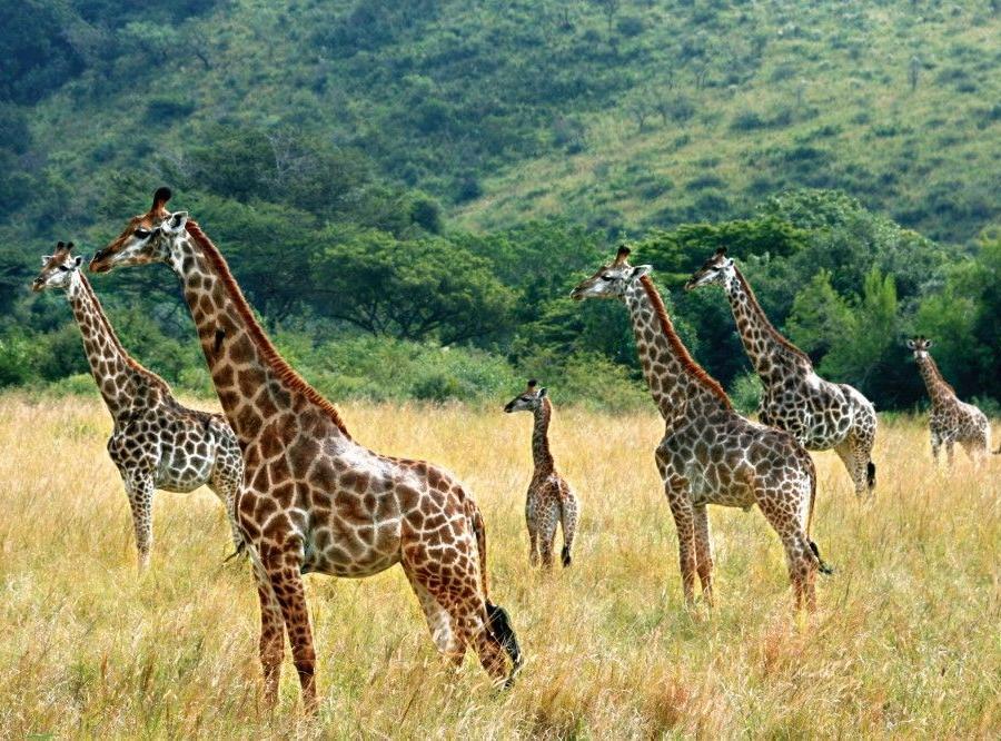 Reise in Südafrika, Walbeobachtung vor Hermanus