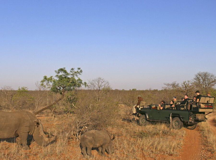 Reise in Südafrika, Aufregende Begegnung mit Nashörnern bei einer Pirschfahrt