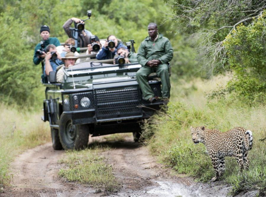 Reise in Südafrika, Auf Pirsch im Krüger NP