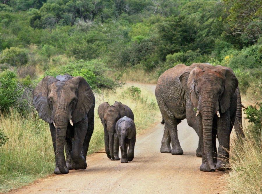 Reise in Südafrika, Elefanten im Krüger-Nationalpark