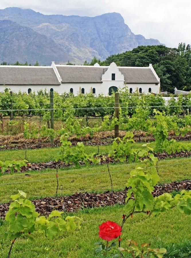Reise in Südafrika, Weinland um Stellenbosch