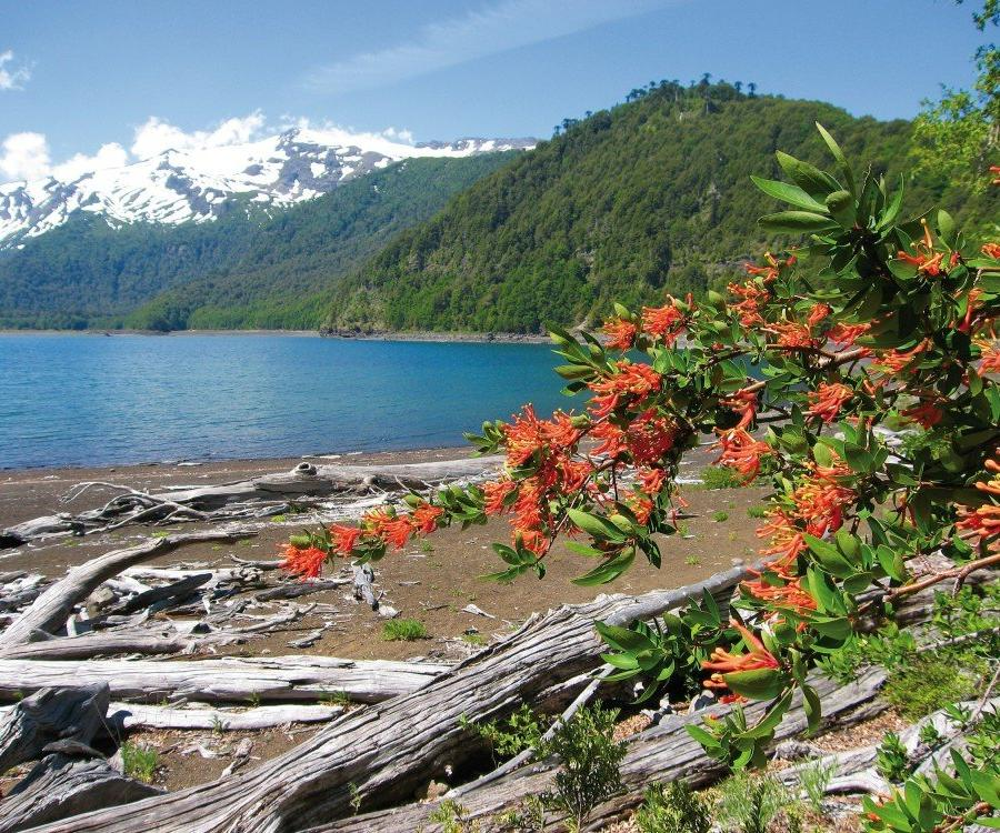 Reise in Argentinien, Vulkan Osorno vor dem  Llanquihue-See