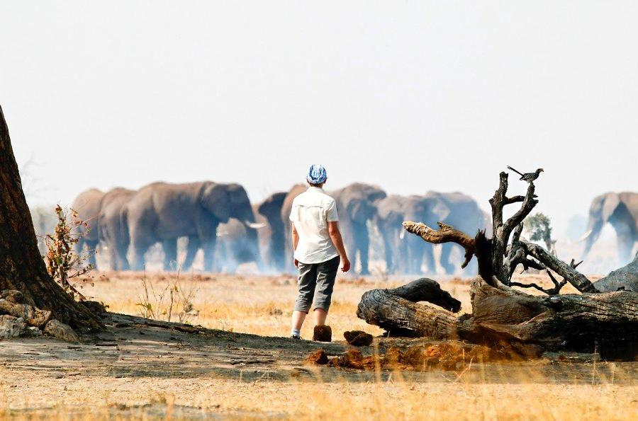 Reise in Botswana, Fußsafari in Botswana