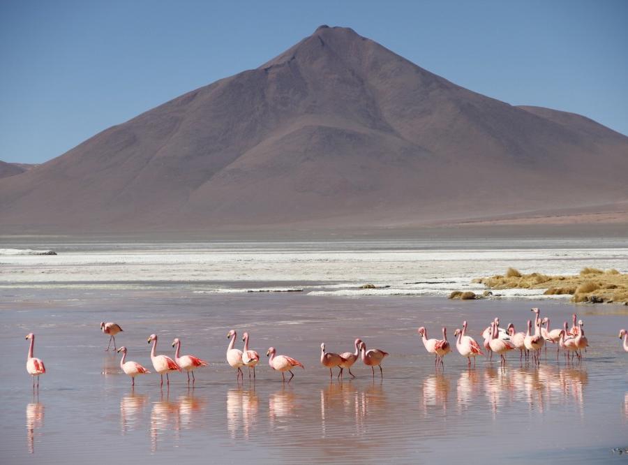 Reise in Bolivien, Zu den Ursprüngen Südamerikas Kultur- und Naturreise